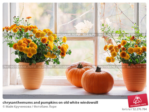 Купить «chrysanthemums and pumpkins on old white windowsill», фото № 32276784, снято 6 октября 2019 г. (c) Майя Крученкова / Фотобанк Лори