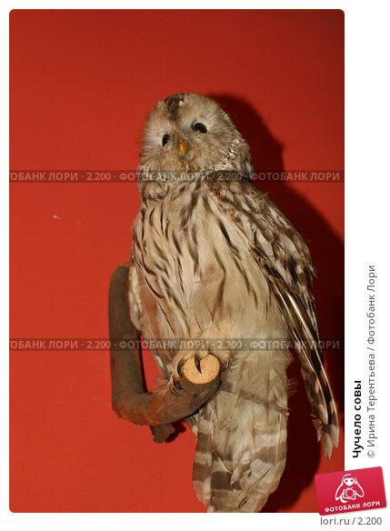Чучело совы, эксклюзивное фото № 2200, снято 28 мая 2005 г. (c) Ирина Терентьева / Фотобанк Лори