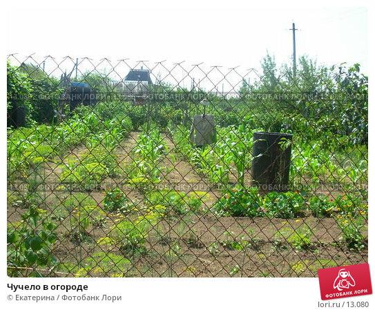 Купить «Чучело в огороде», фото № 13080, снято 15 июля 2006 г. (c) Екатерина / Фотобанк Лори