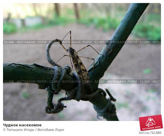 Чудное насекомое, фото № 52880, снято 30 апреля 2007 г. (c) Тютькало Игорь / Фотобанк Лори
