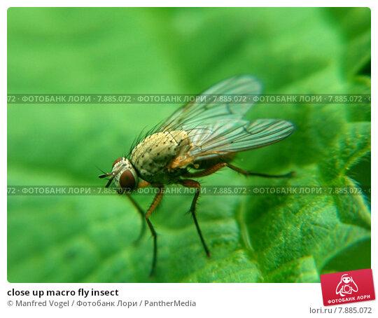 Купить «close up macro fly insect», фото № 7885072, снято 18 октября 2019 г. (c) PantherMedia / Фотобанк Лори
