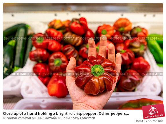 Close up of a hand holding a bright rd crisp pepper. Other peppers... Стоковое фото, фотограф Zoonar.com/VALMEDIA / easy Fotostock / Фотобанк Лори