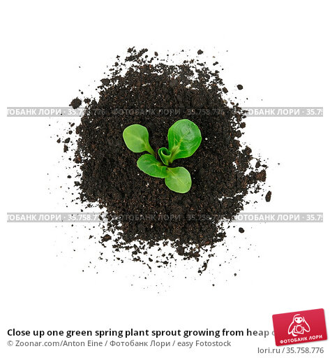 Close up one green spring plant sprout growing from heap of black... Стоковое фото, фотограф Zoonar.com/Anton Eine / easy Fotostock / Фотобанк Лори