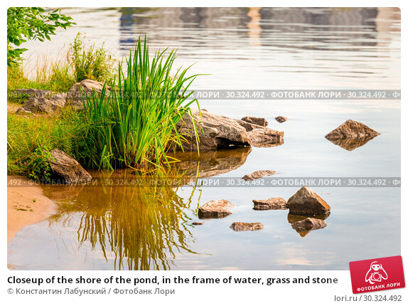 Купить «Closeup of the shore of the pond, in the frame of water, grass and stone», фото № 30324492, снято 12 июля 2018 г. (c) Константин Лабунский / Фотобанк Лори
