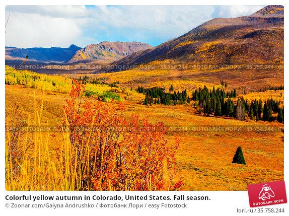 Colorful yellow autumn in Colorado, United States. Fall season. Стоковое фото, фотограф Zoonar.com/Galyna Andrushko / easy Fotostock / Фотобанк Лори