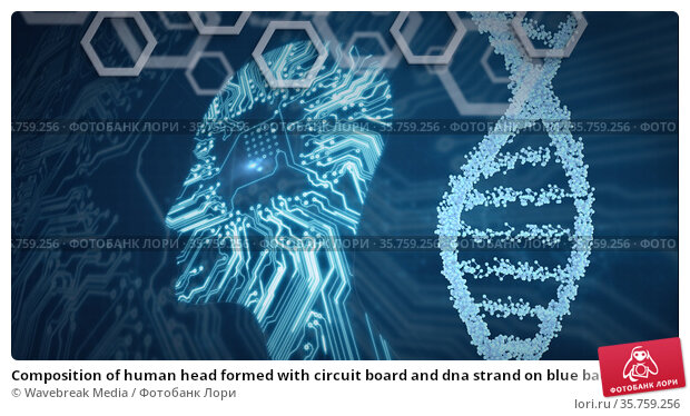 Composition of human head formed with circuit board and dna strand on blue background. Стоковое фото, агентство Wavebreak Media / Фотобанк Лори