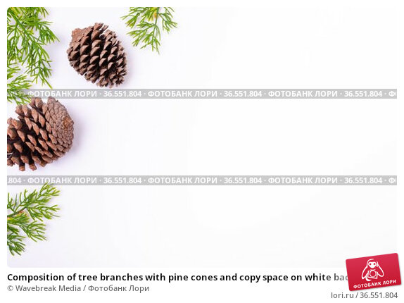 Composition of tree branches with pine cones and copy space on white background. Стоковое фото, агентство Wavebreak Media / Фотобанк Лори
