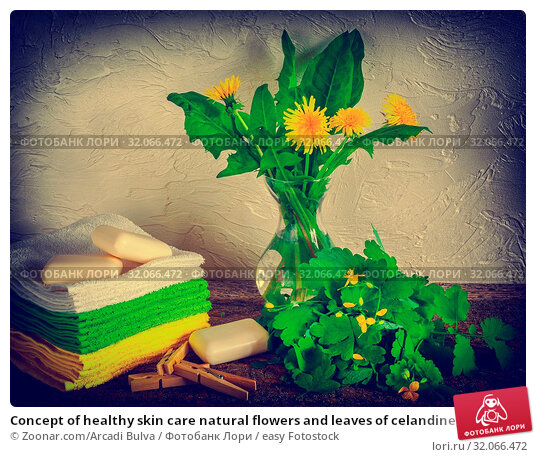 Concept of healthy skin care natural flowers and leaves of celandine, soap and bath towel, retro style. Стоковое фото, фотограф Zoonar.com/Arcadi Bulva / easy Fotostock / Фотобанк Лори