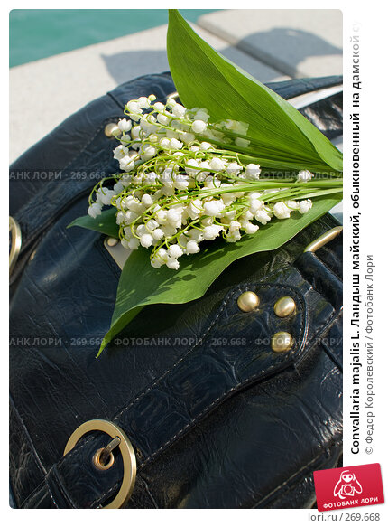 Купить «Convallaria majalis L. Ландыш майский, обыкновенный  на дамской сумке», фото № 269668, снято 1 мая 2008 г. (c) Федор Королевский / Фотобанк Лори