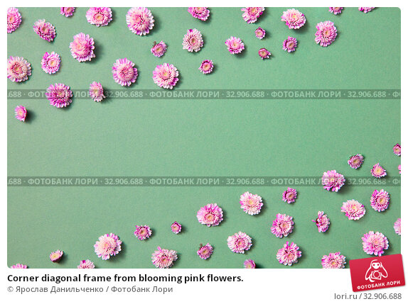 Corner diagonal frame from blooming pink flowers. Стоковое фото, фотограф Ярослав Данильченко / Фотобанк Лори