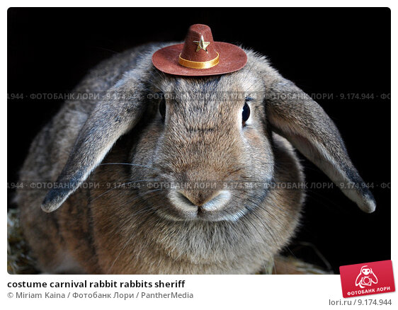 Купить «costume carnival rabbit rabbits sheriff», фото № 9174944, снято 18 июля 2019 г. (c) PantherMedia / Фотобанк Лори