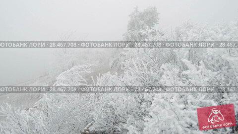 Купить «Covered with a hoarfrost mountain glade. Windy and foggy weather.», видеоролик № 28467708, снято 27 марта 2018 г. (c) Андрей Радченко / Фотобанк Лори