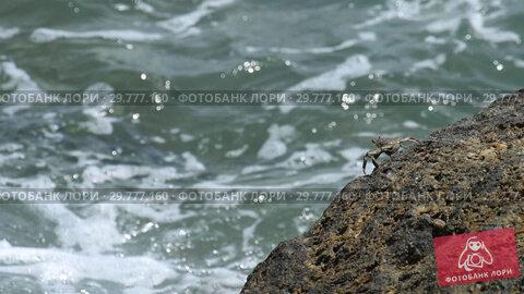Купить «Crab on the rock at the beach», видеоролик № 29777160, снято 18 января 2019 г. (c) Игорь Жоров / Фотобанк Лори