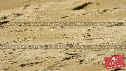 Crab on the sandy beach. Стоковое видео, видеограф Игорь Жоров / Фотобанк Лори