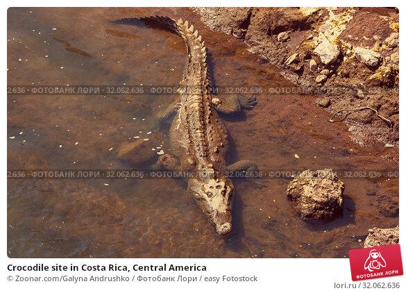 Crocodile site in Costa Rica, Central America. Стоковое фото, фотограф Zoonar.com/Galyna Andrushko / easy Fotostock / Фотобанк Лори