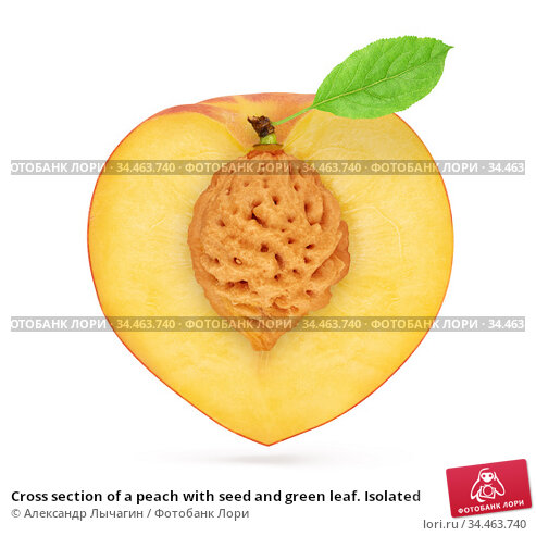 Cross section of a peach with seed and green leaf. Isolated. Стоковое фото, фотограф Александр Лычагин / Фотобанк Лори