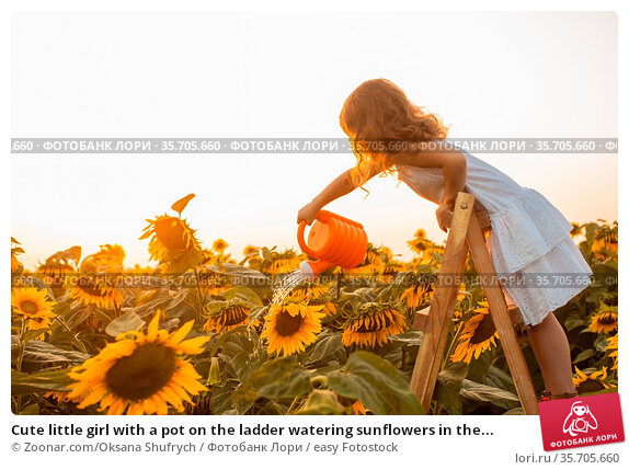 Cute little girl with a pot on the ladder watering sunflowers in the... Стоковое фото, фотограф Zoonar.com/Oksana Shufrych / easy Fotostock / Фотобанк Лори