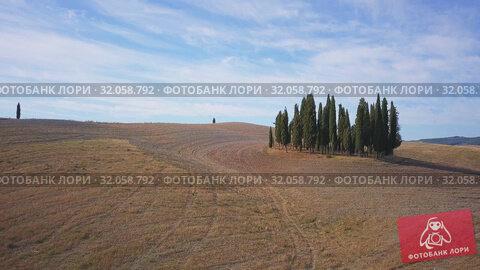 Cypresses group in Tuscany, Italy. Редакционное видео, видеограф Антон Гвоздиков / Фотобанк Лори