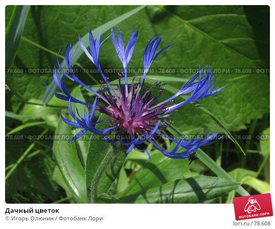 Дачный цветок, фото № 78608, снято 2 июля 2006 г. (c) Игорь Олюнин / Фотобанк Лори