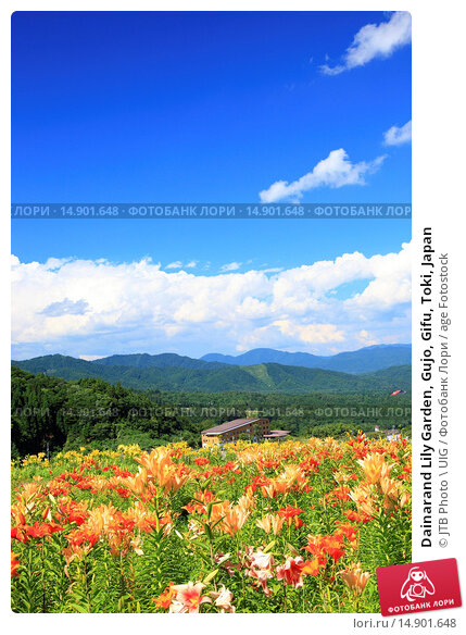 Купить «Dainarand Lily Garden, Gujo, Gifu, Toki, Japan», фото № 14901648, снято 21 июня 2018 г. (c) age Fotostock / Фотобанк Лори