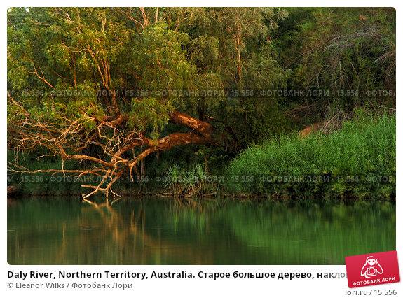 Daly River, Northern Territory, Australia. Старое большое дерево, наклоненное над спокойными водами лесной реки на закате дня.  , фото № 15556, снято 25 декабря 2006 г. (c) Eleanor Wilks / Фотобанк Лори