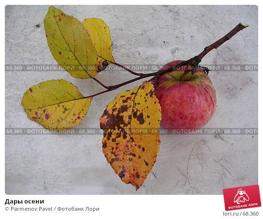 Купить «Дары осени», фото № 68360, снято 8 октября 2006 г. (c) Parmenov Pavel / Фотобанк Лори