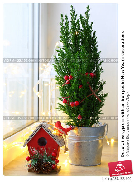 Decorative cypress with an iron pot in New Year's decorations. Стоковое фото, фотограф Марина Володько / Фотобанк Лори