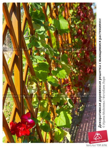 Купить «Декоративная деревянная решетка с вьющимися растениями», фото № 191616, снято 26 сентября 2007 г. (c) Ирина Мойсеева / Фотобанк Лори
