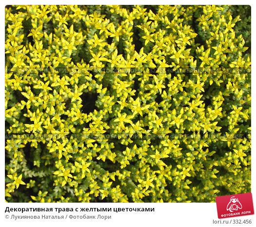 Декоративная трава с желтыми цветочками, фото № 332456, снято 19 июня 2008 г. (c) Лукиянова Наталья / Фотобанк Лори