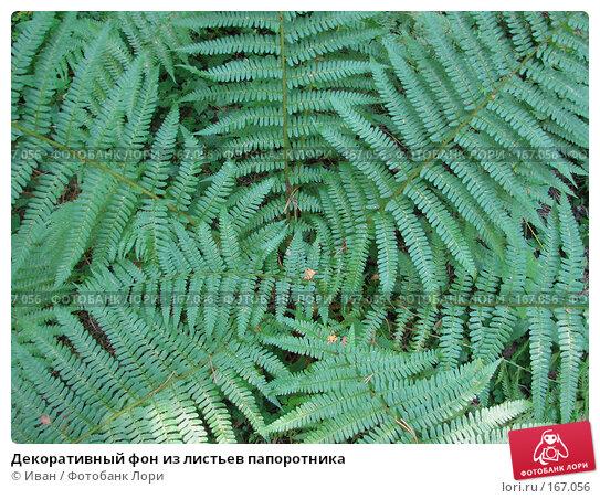 Декоративный фон из листьев папоротника, фото № 167056, снято 12 июля 2007 г. (c) Иван / Фотобанк Лори