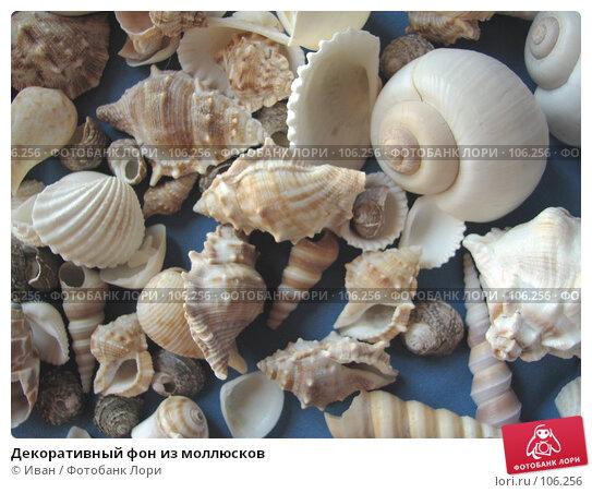 Купить «Декоративный фон из моллюсков», фото № 106256, снято 30 марта 2007 г. (c) Иван / Фотобанк Лори