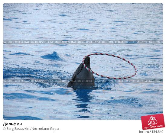 Дельфин, фото № 134340, снято 4 апреля 2007 г. (c) Serg Zastavkin / Фотобанк Лори