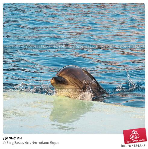Дельфин, фото № 134348, снято 4 апреля 2007 г. (c) Serg Zastavkin / Фотобанк Лори