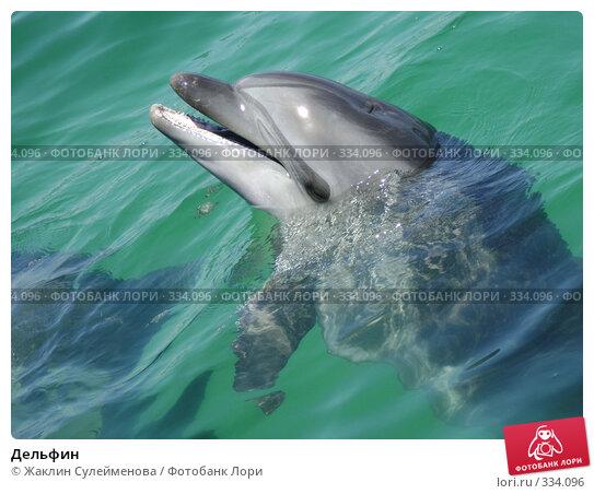 Дельфин, фото № 334096, снято 12 июня 2008 г. (c) Жаклин Сулейменова / Фотобанк Лори