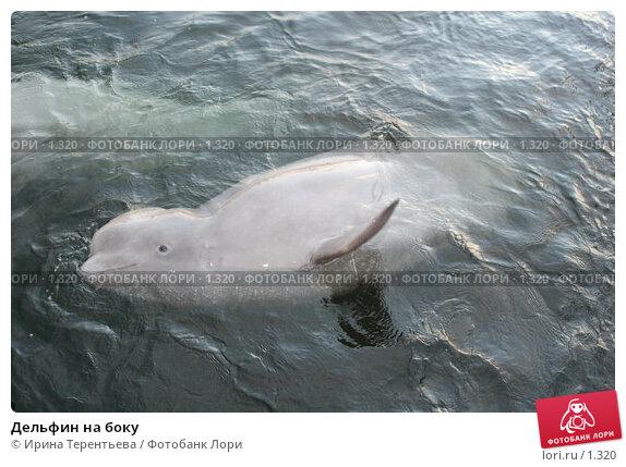 Купить «Дельфин на боку», эксклюзивное фото № 1320, снято 15 сентября 2005 г. (c) Ирина Терентьева / Фотобанк Лори