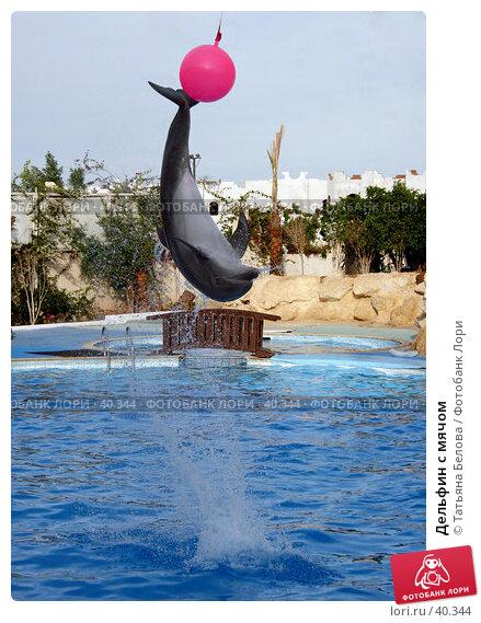 Дельфин с мячом, эксклюзивное фото № 40344, снято 16 января 2006 г. (c) Татьяна Белова / Фотобанк Лори