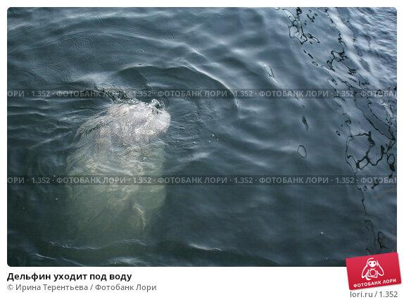 Дельфин уходит под воду, эксклюзивное фото № 1352, снято 15 сентября 2005 г. (c) Ирина Терентьева / Фотобанк Лори