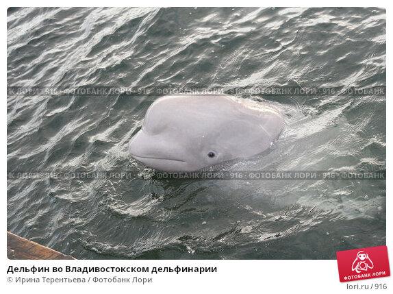 Дельфин во Владивостокском дельфинарии, эксклюзивное фото № 916, снято 19 сентября 2005 г. (c) Ирина Терентьева / Фотобанк Лори