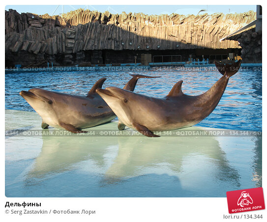 Дельфины, фото № 134344, снято 4 апреля 2007 г. (c) Serg Zastavkin / Фотобанк Лори