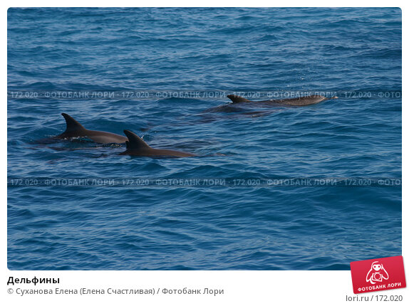 Дельфины, фото № 172020, снято 15 ноября 2006 г. (c) Суханова Елена (Елена Счастливая) / Фотобанк Лори