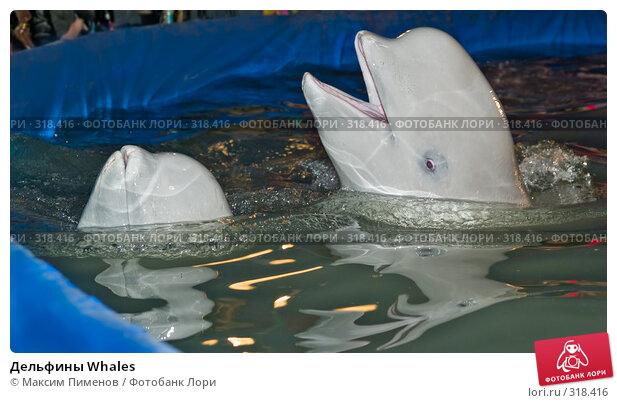 Дельфины Whales, фото № 318416, снято 19 апреля 2008 г. (c) Максим Пименов / Фотобанк Лори
