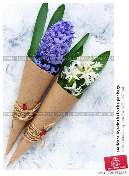 Купить «Delicate hyacinths in the package», фото № 28163896, снято 12 марта 2018 г. (c) Марина Сапрунова / Фотобанк Лори
