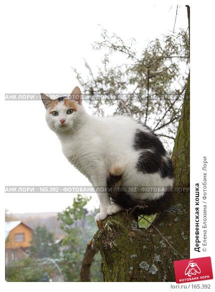 Купить «Деревенская кошка», фото № 165392, снято 19 октября 2007 г. (c) Елена Блохина / Фотобанк Лори
