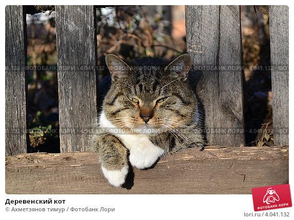 Деревенский кот. Стоковое фото, фотограф Ахметзянов тимур / Фотобанк Лори