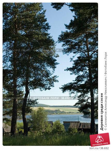 Купить «Деревня среди сосен», фото № 38692, снято 23 июля 2005 г. (c) Саломатов Александр Николаевич / Фотобанк Лори