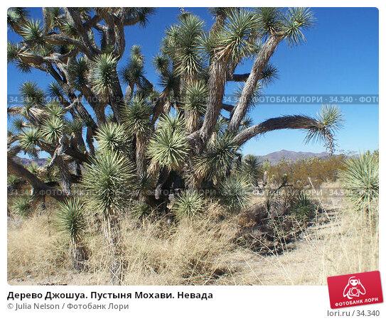 Дерево Джошуа. Пустыня Мохави. Невада, фото № 34340, снято 22 февраля 2007 г. (c) Julia Nelson / Фотобанк Лори