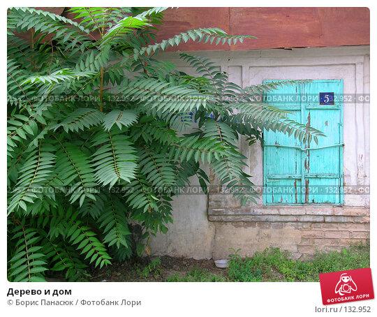 Дерево и дом, фото № 132952, снято 31 августа 2004 г. (c) Борис Панасюк / Фотобанк Лори