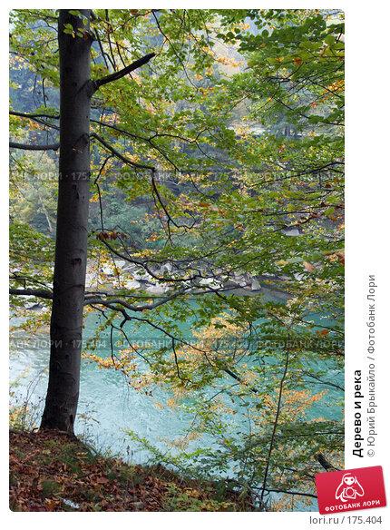 Дерево и река, фото № 175404, снято 1 октября 2007 г. (c) Юрий Брыкайло / Фотобанк Лори