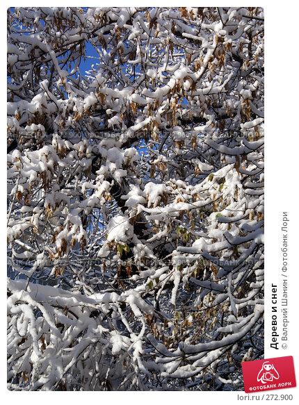 Дерево и снег, фото № 272900, снято 24 ноября 2007 г. (c) Валерий Шанин / Фотобанк Лори