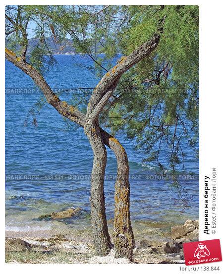 Дерево на берегу, фото № 138844, снято 5 июля 2007 г. (c) Estet / Фотобанк Лори